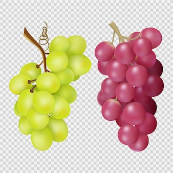 Realistic grapes isolated on transparent background. bunches of red and white grapes