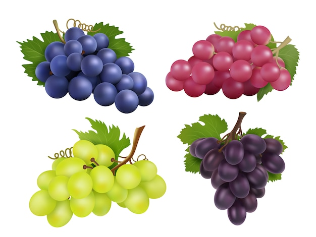 Realistic grapes.