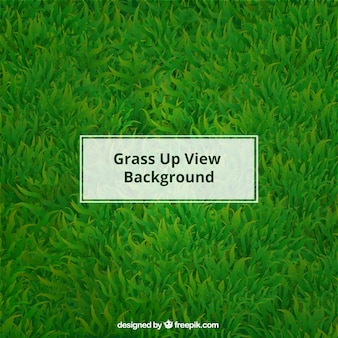 Realistic grass background