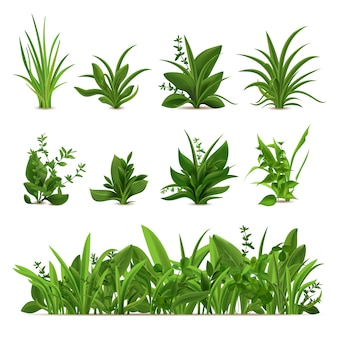 Realistic grass bushes. green fresh plants, garden seasonal spring and summer greens and herbs, botanical sprout   set. natural lawn meadow bushes, floral vegetation border