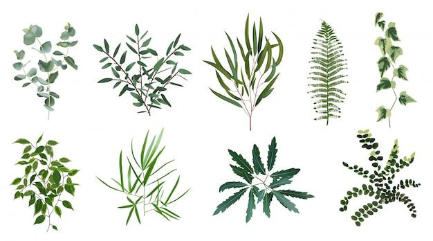 現実的な緑のハーブ植物。自然植物の葉、緑の葉、森のシダ、ユーカリ植物、植物の葉のイラストセット。葉の自然な熱帯の葉、植物の緑