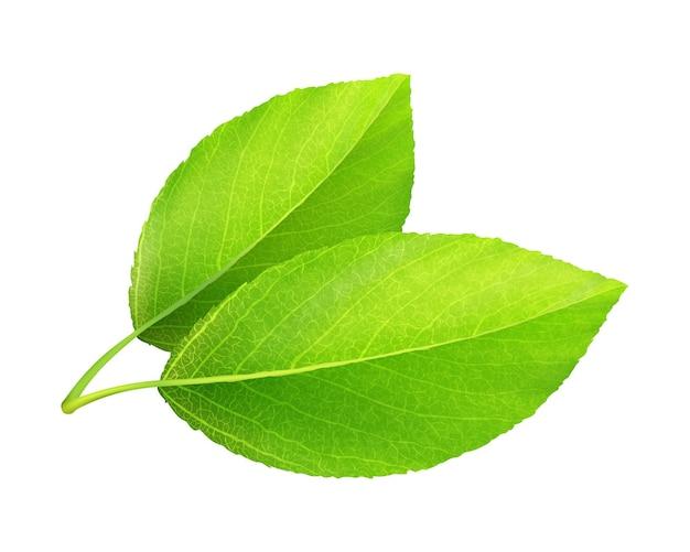 현실적인 녹색 잎입니다. 디자인 및 일러스트레이션을 위한 자연 벡터 요소