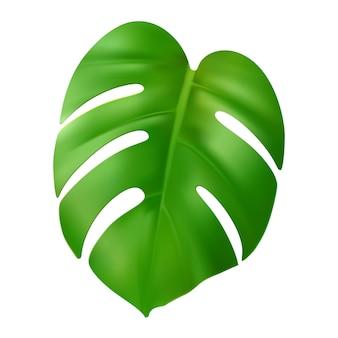 현실적인 녹색 몬스테라 잎 벡터 열대 야자수 잎 매우 상세한 이국적인 정글 단풍