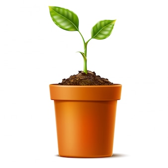 Realistic green seedling grows in soil in ceramic pot