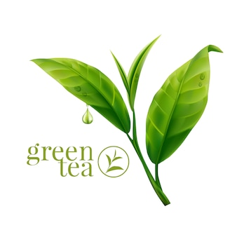 Realistic green tea leaves background