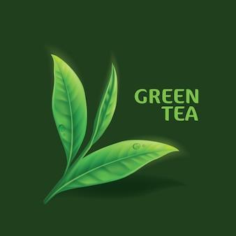 Реалистичные листья зеленого чая на белом фоне