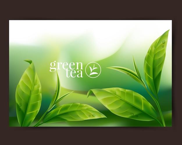 현실적인 녹차 잎