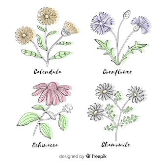 リアルな手描きのさまざまな色の植物の花のコレクション