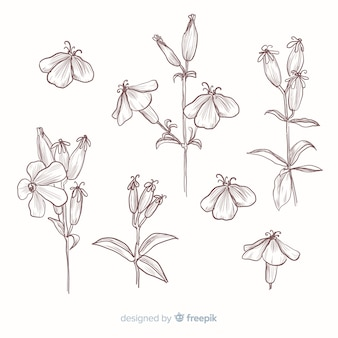 Realistic hand drawn botanical flowers collection in sepia