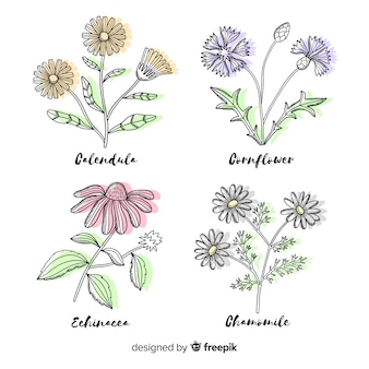 Realistic hand drawn botanical flowers collection in variety of colours