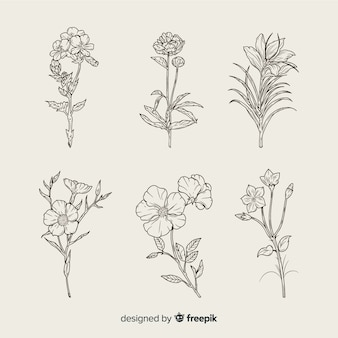 Realistic hand drawn botanical flowers set