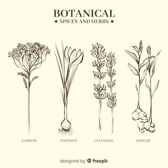 Реалистичные рисованной ботанические специи и травы