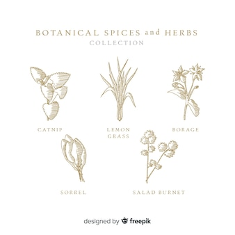 Realistic hand drawn botanical spices and herbs