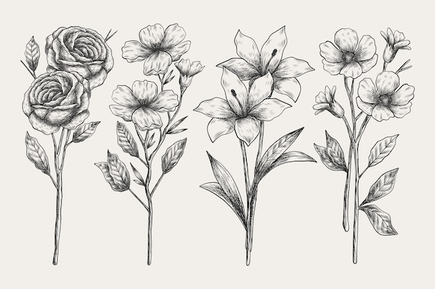 Realistic hand drawn botany collection
