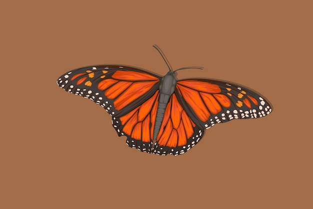 Realistic hand drawn butterfly