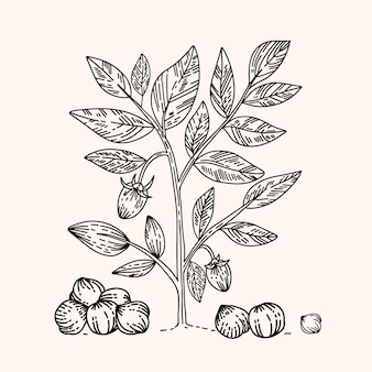 リアルな手描きひよこ豆豆と植物