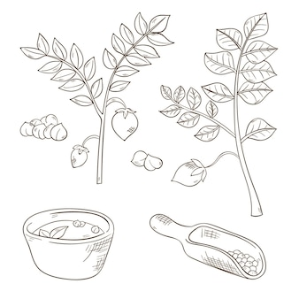 Realistic hand drawn chickpea beans and plant set