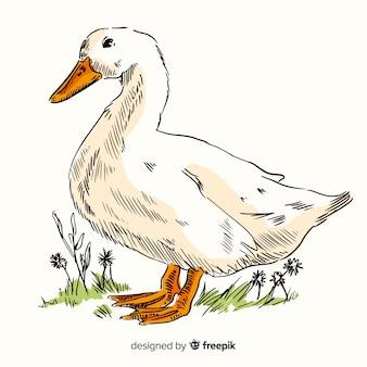 Realistic hand drawn duck