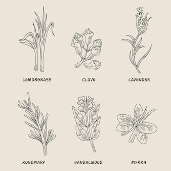 Realistic hand drawn essential oil herb collection