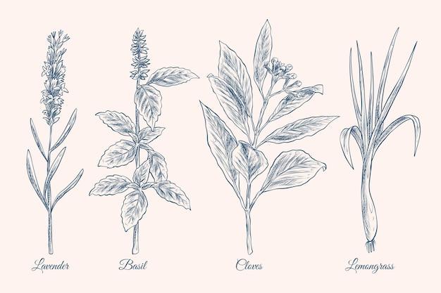 Collezione di erbe di olio essenziale disegnata a mano realistica