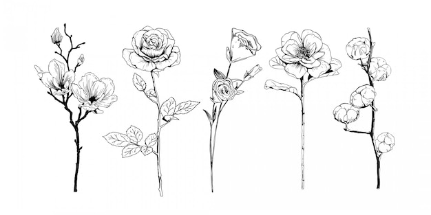 Realistic hand drawn flowers collection