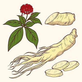 リアルな手描きの高麗人参植物コレクション