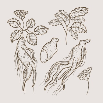 Realistic hand drawn ginseng plant pack