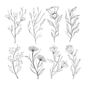 Erbe disegnate a mano realistiche e fiori selvatici