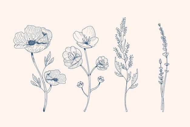 현실적인 손으로 그린 허브 & 야생화