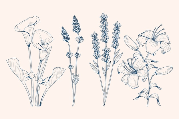 Realistic hand drawn herbs & wild flowers