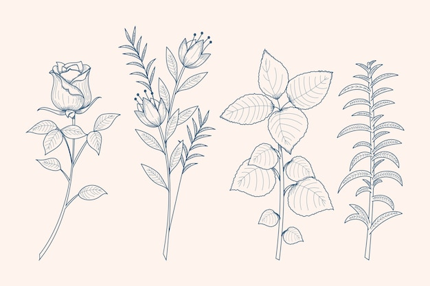 Realistic hand-drawn herbs & wild flowers
