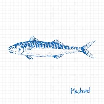 Realistic hand drawn illustration a mackerel
