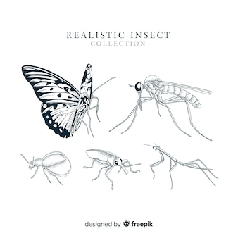 Realistic hand drawn insect collection