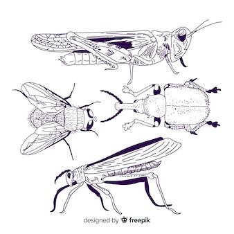 Pacchetto di schizzo di insetti disegnati a mano realistico