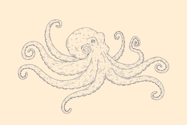 Realistic hand drawn octopus