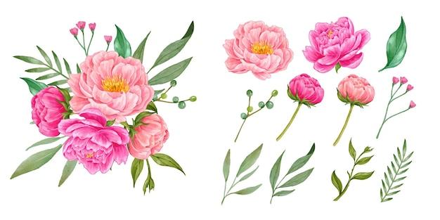 Реалистичная рисованная коллекция цветов пиона