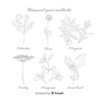 Реалистичные рисованной коллекции специй и трав эскизы