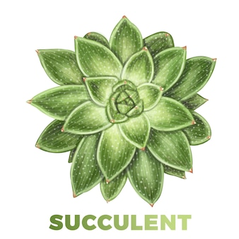 Realistic hand drawn succulent illustration