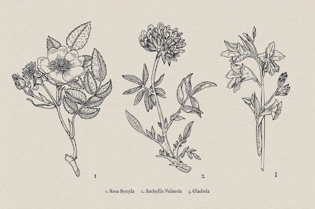 Realistic hand drawn vintage botany flower collection