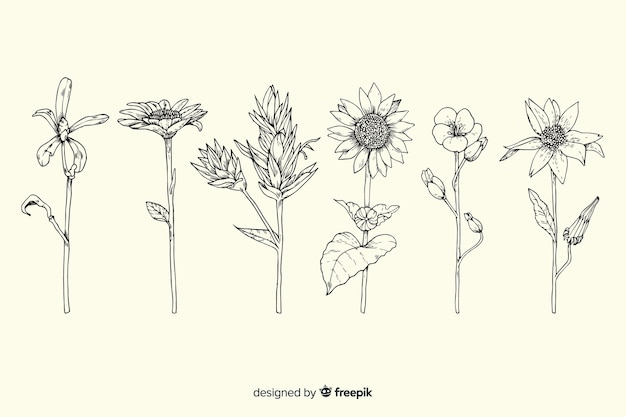 現実的な手描きのヴィンテージ植物学フラワーパック 無料ベクター