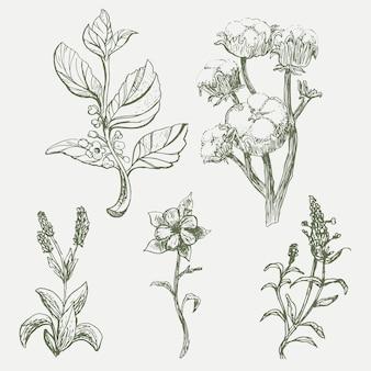 Realistic hand drawn vintage botany flower set
