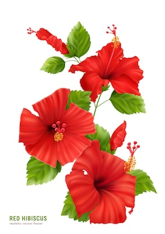 Realistic hibiscus flowers composition