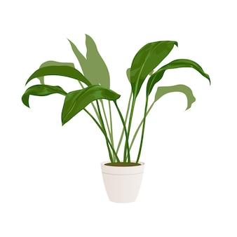 인테리어 디자인 및 장식을위한 현실적인 가정 또는 사무실 식물. 열대 및 이국적인 식물. 미니멀리즘 스타일 일러스트레이션