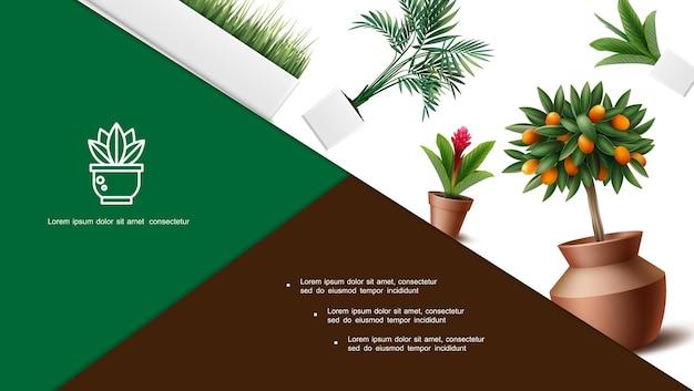 Реалистичная композиция домашних растений с кумкватом, красный цветок имбиря, пальмовые листья, трава в горшках