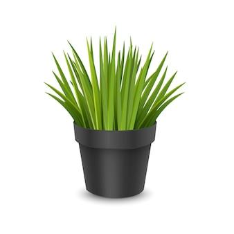 鉢植えのリアルな観葉植物