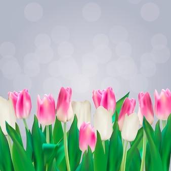 Realistic  illustration colorful tulips background