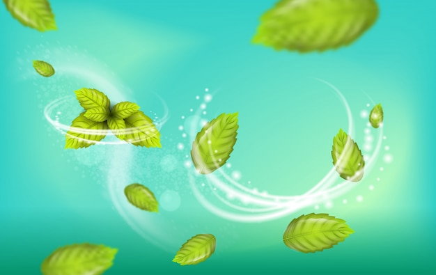 Realistic illustration flying mint leaf vector