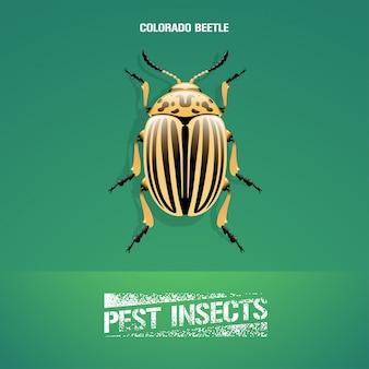 昆虫leptinotarsa decemlineata(コロラド州カブトムシ)のリアルなイラスト