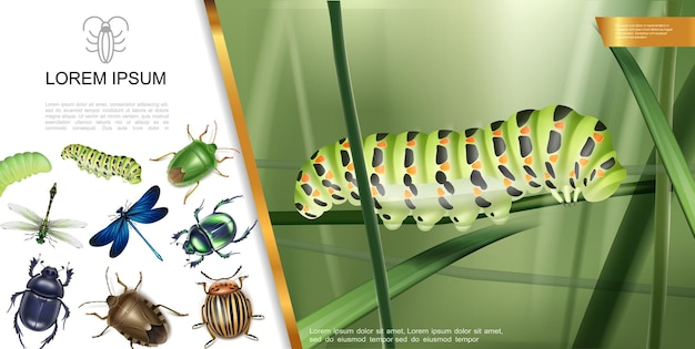 Realistic insects composition with caterpillar on grass dragonflies mosquito scarab and colorado potato beetle dung bug  illustration