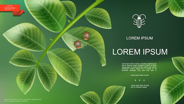 Realistic insects natural template with colorado beetles on potato plant leaves on green background  illustration